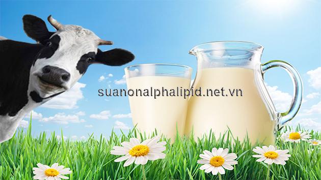 Sữa non bò có tinh chất tự nhiên gần giống như của người