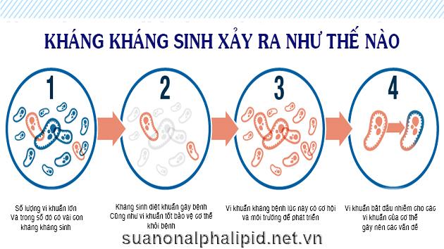 Kháng kháng sinh diễn ra như thế nào