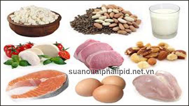 protein thuc vat