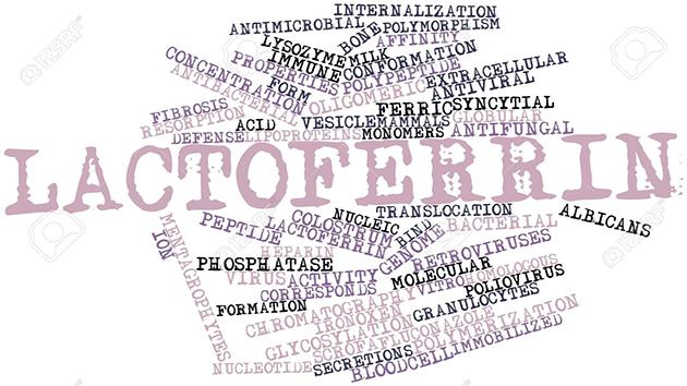 lactoferrin-chất chống oxy hóavà bảo vệ cơ thể chống lại vi khuẩn vànhiễm virus